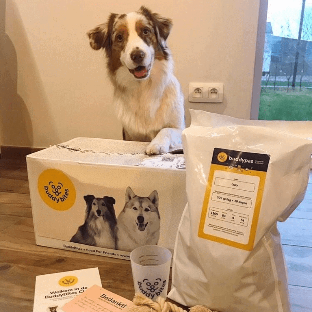Australische herder die haar BuddyBites pakket aan het ontdekken is.