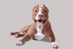 Blije hond die neerligt en veel energie uitstraalt.