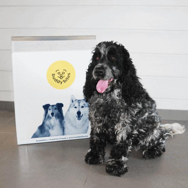 Hond Noor met een zwarte vacht zit naast haar pakketje hondenvoeding van BuddyBites.