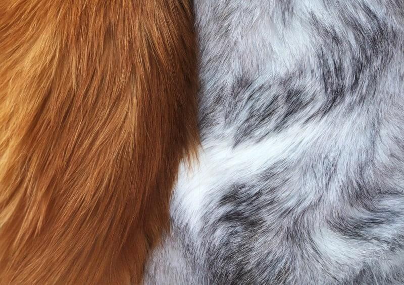 Blonde en grijze hondenvacht.