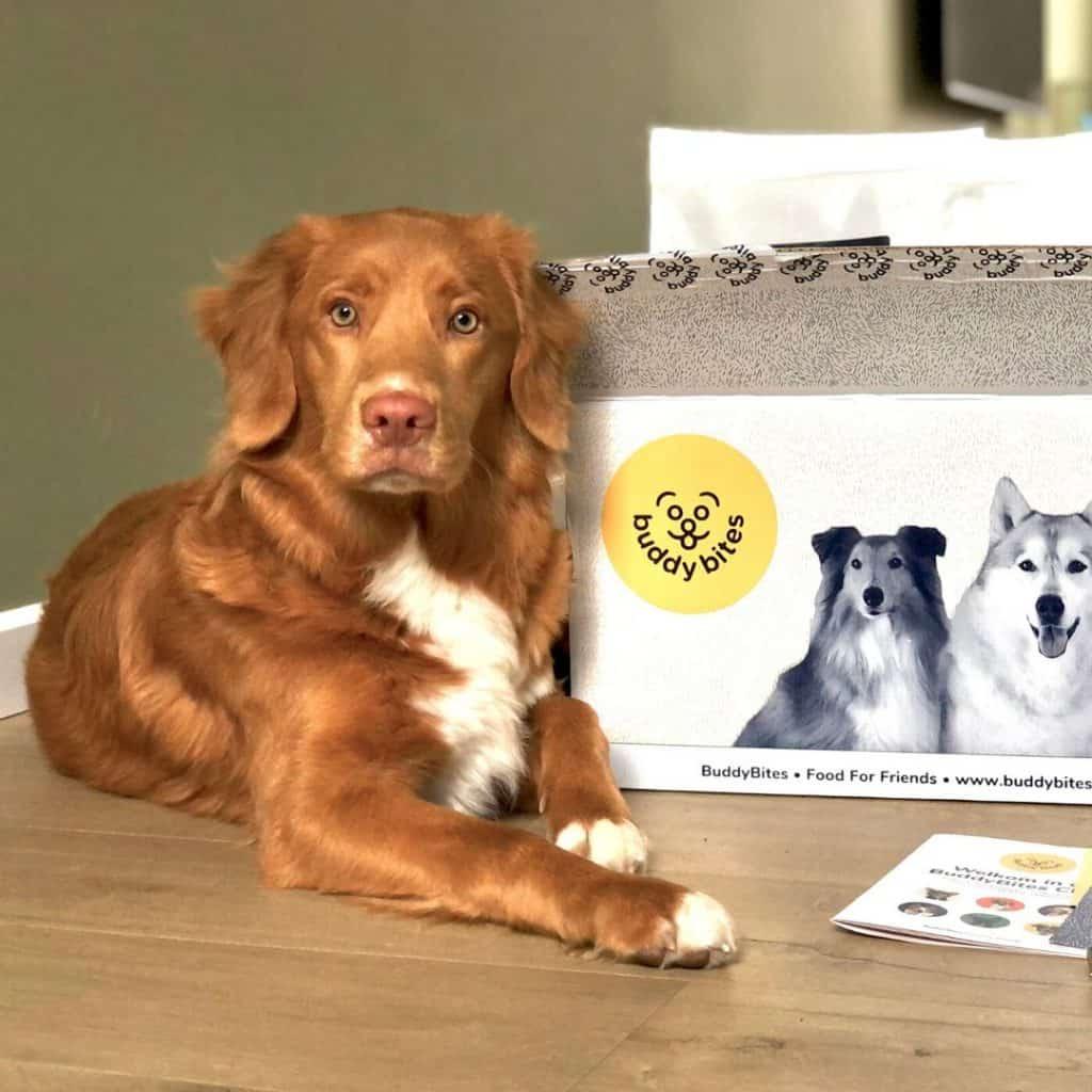 Hond Nelson die neerligt naast de verpakking van BuddyBites hondenvoer.