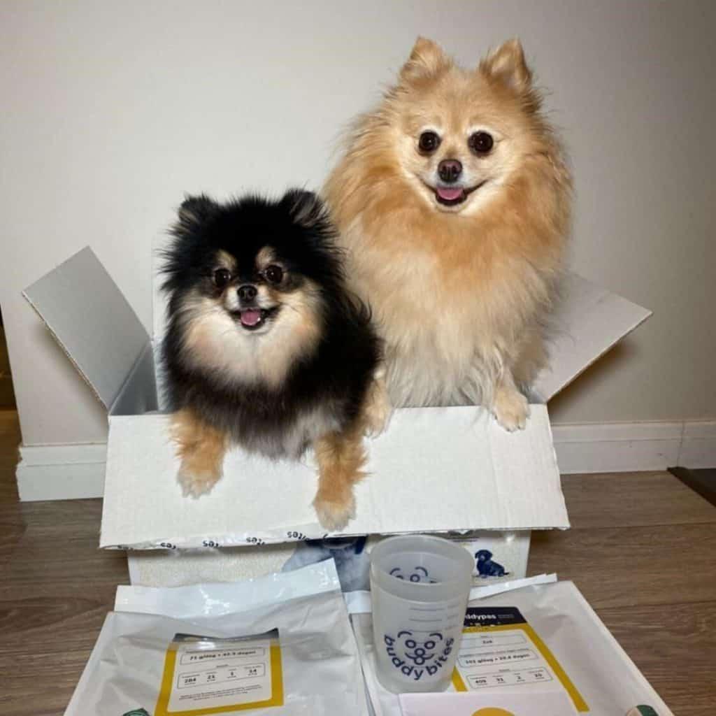 Twee hondjes, Zoë en Fenna, zitten samen in de geleverde box van BuddyBites. Naast de doos liggen er verpakkingen persoonlijke hondenvoeding met maatbekers om de voeding af te meten.