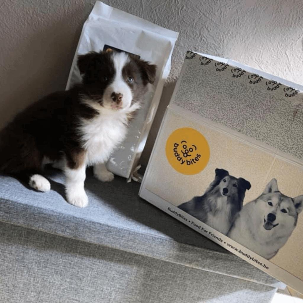 Pup Molly staat naast haar doos BuddyBites.