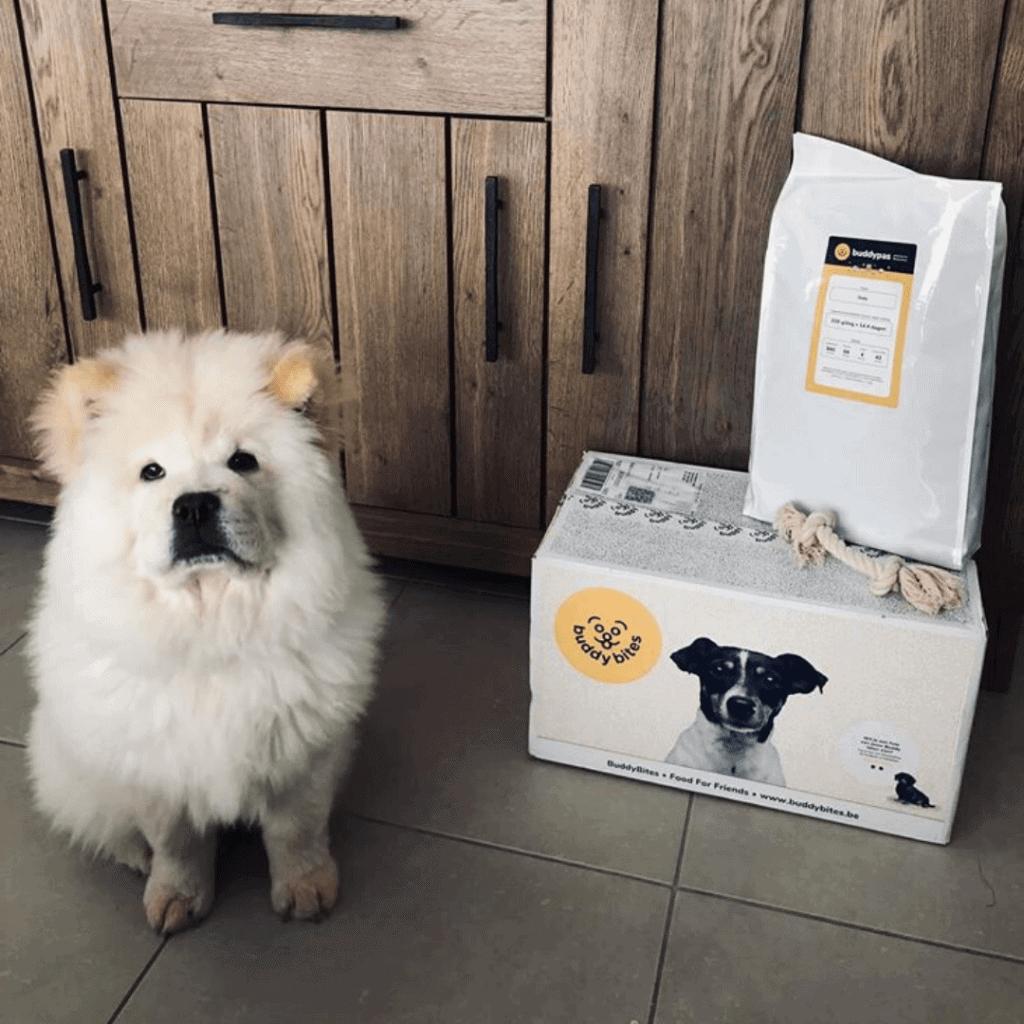 Witte hond staat naast haar doos BuddyBites met persoonlijk hondenvoer en flostouw.