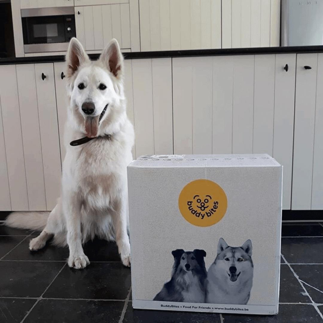 Witte zwitserse herder Yuki staat in de keuken naast zijn doos hondenvoeding van BuddyBites.