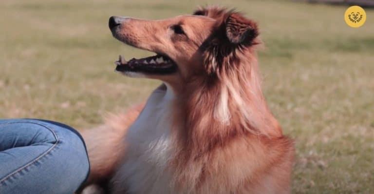 Sky leert andere Buddy's spelen met een frisbee. Bekijk dit filmpje om jouw hond met een frisbee te laten spelen. Succes!
