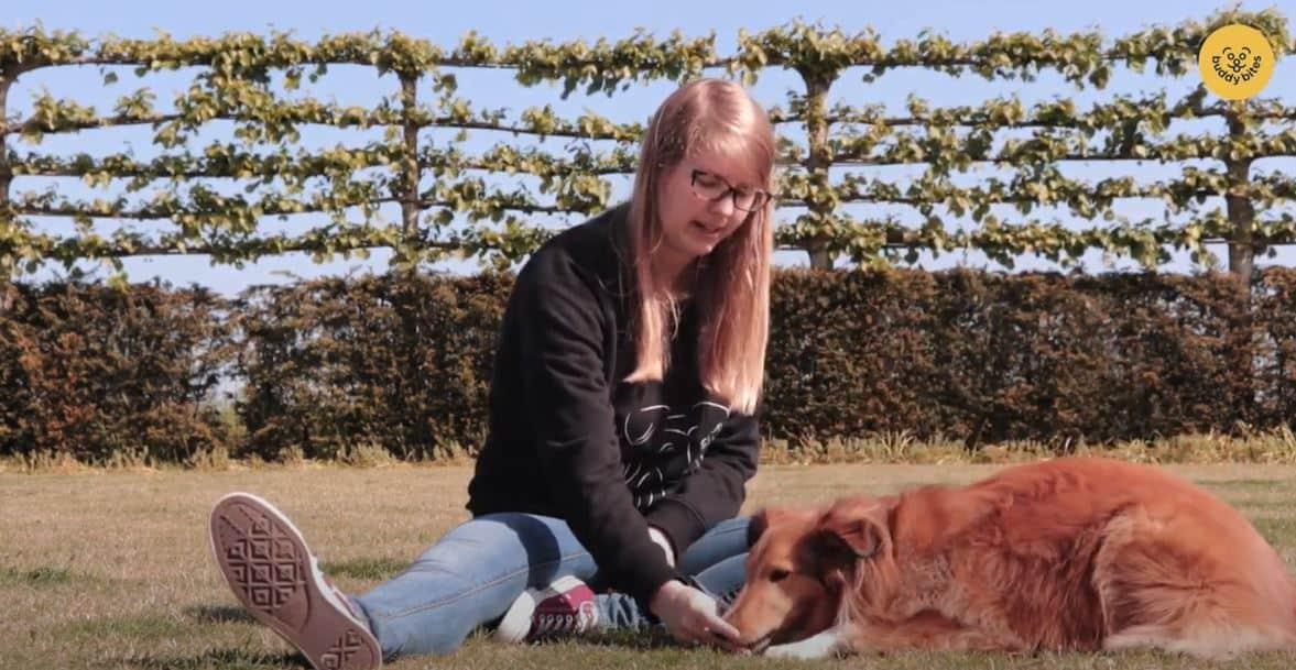 Hoe leer je je hond liggen? Sky, de mascottehond van buddybites toont het voor.