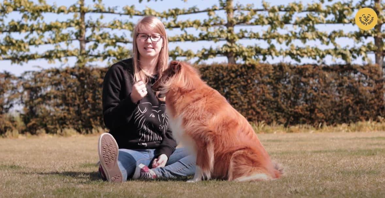 Hoe leer je je hond staan? Sky toont het andere Buddy's voor!