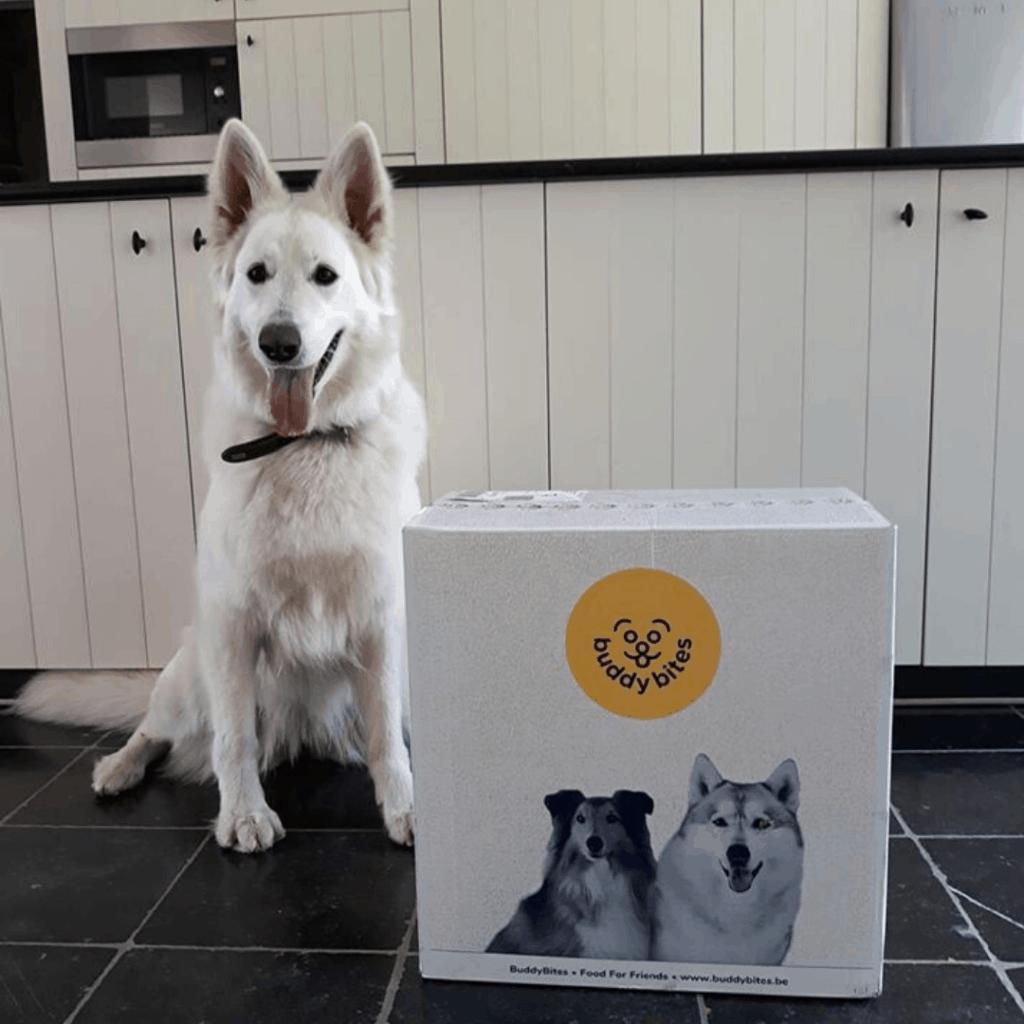 siberische herder hond naast zijn gepersonaliseerde gezonde voeding van buddybites