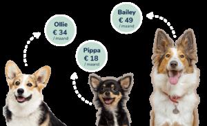 hondenvoeding op maat die aan huis geleverd wordt, aangepast aan je hond