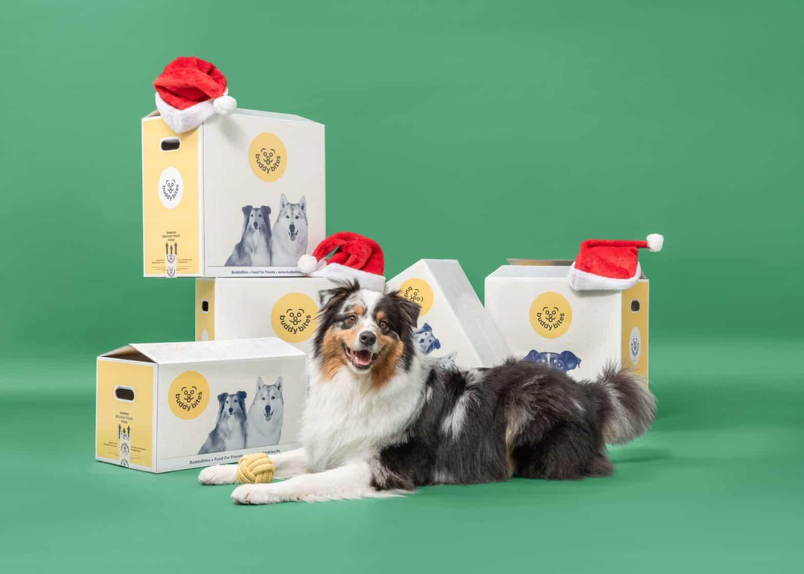 Kerstmis bij BuddyBItes. Hond is gelukkig met zijn kerstgeschenk van BuddyBites.