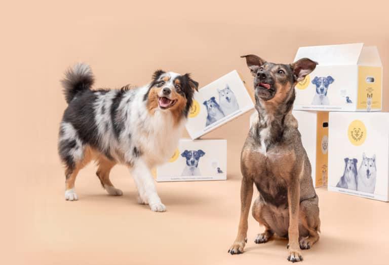 graanvrije en hypoallergene hondenvoeding van buddy bites met een australische herder en een gekruiste hond ernaast