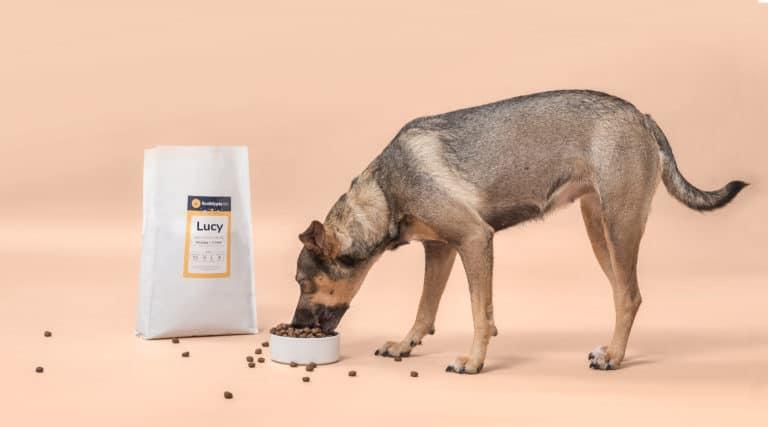 Hond eet gepersonaliseerde hondenvoeding van BuddyBites