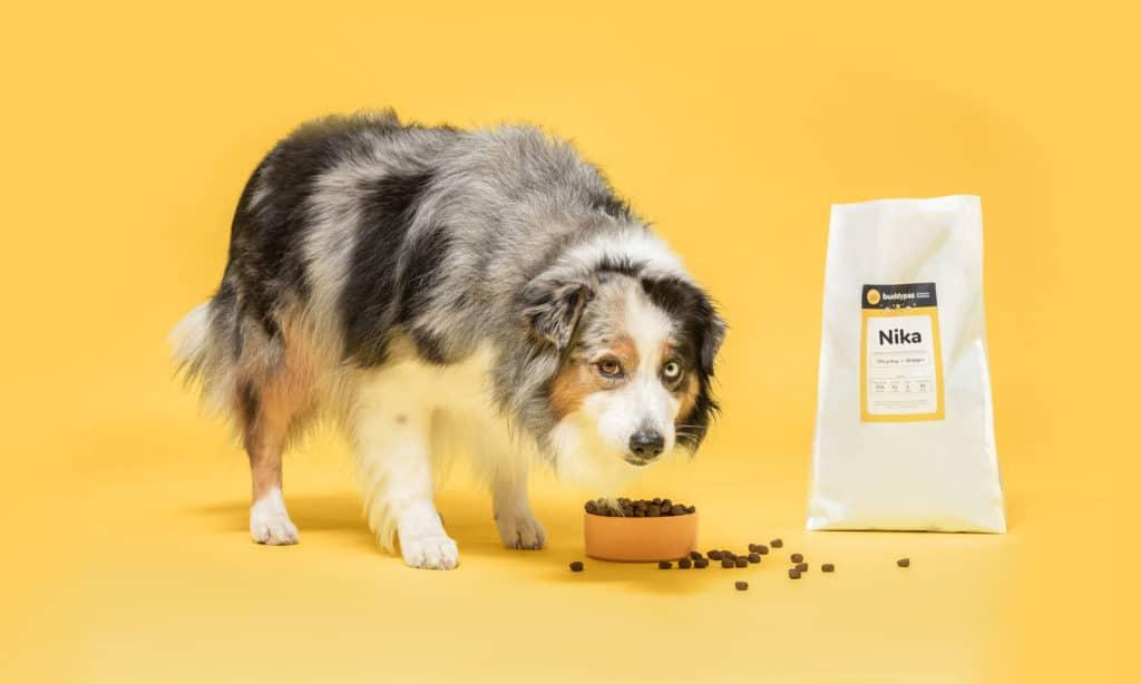 border collie eet uniek en voedzaam hondenvoer van BuddyBites