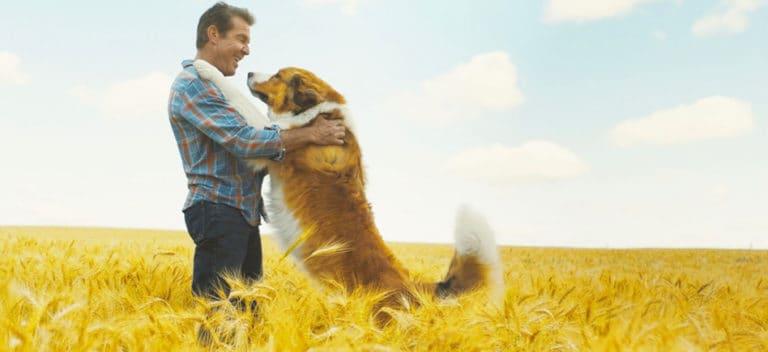 gezond hondenvoer