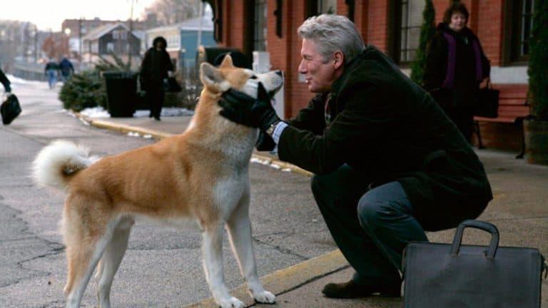 gelukkige hond kijkt naar zijn baasje