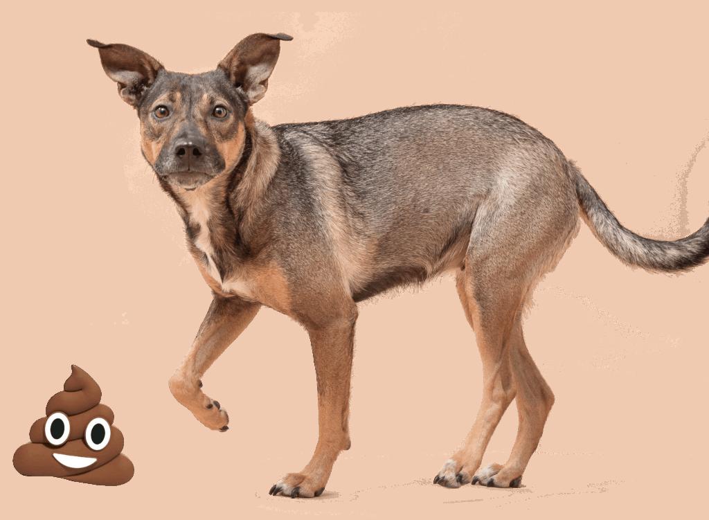 Hond kijkt in de camera na het eten van haar brokjes