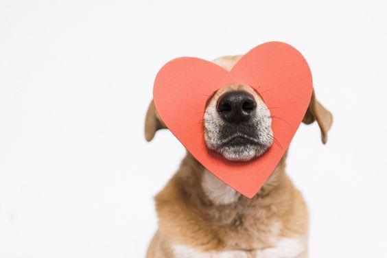 Hond met hartje op zijn snoet voor valentijn. Hondenvoeding die je hond niet mag eten.