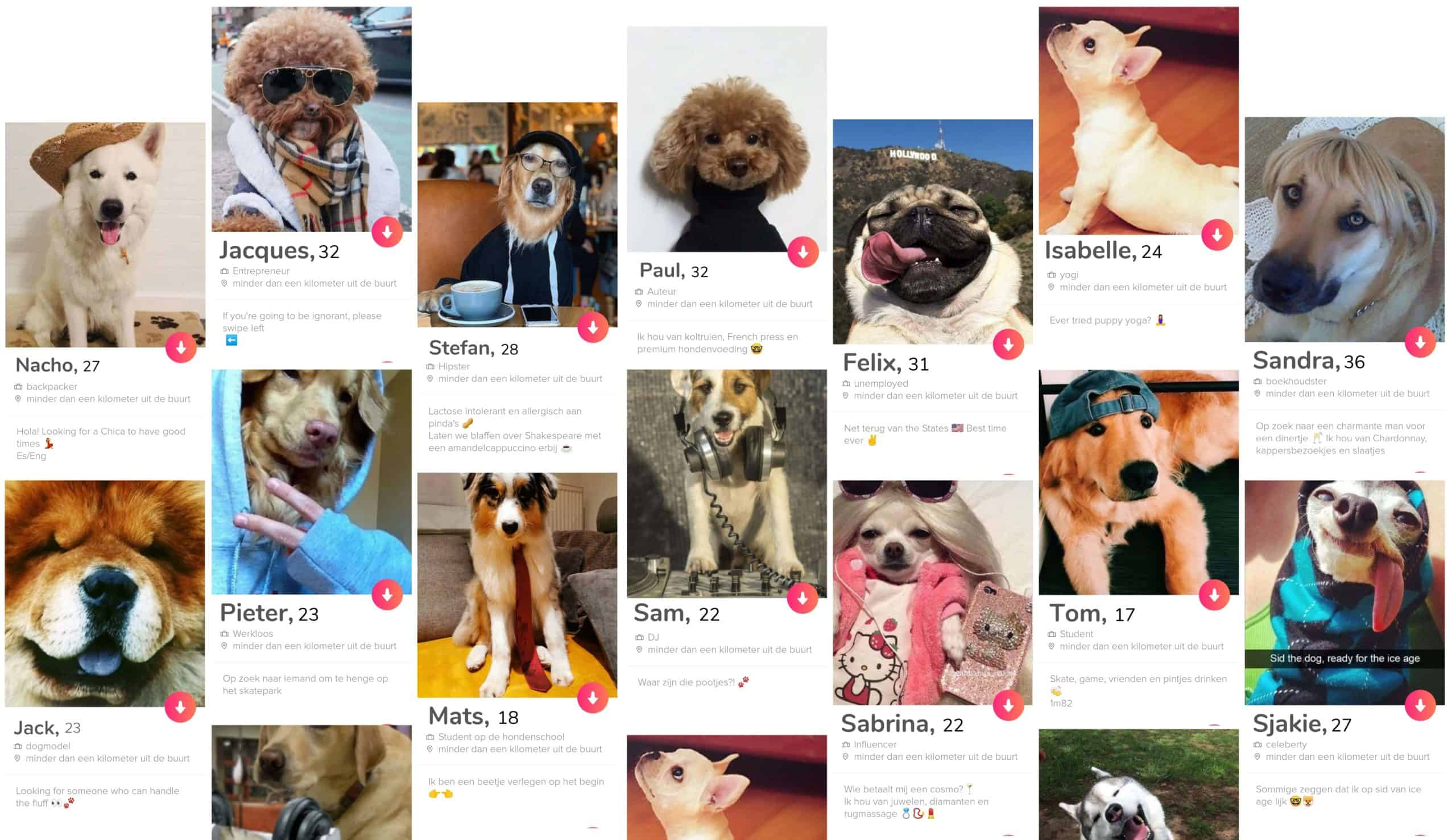 Hondenvoedingsmerk buddybites lanceert een tinderactie