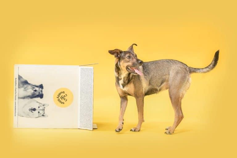 hond kijkt achter zich op de partnerprogramma pagina van Buddybites