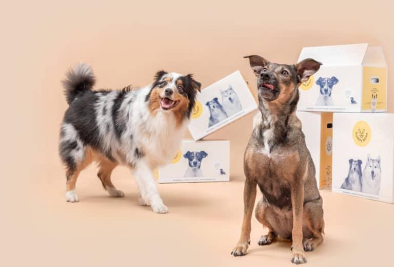 twee lachende honden kijken in de camera met dozen van BuddyBites op de achtergrond