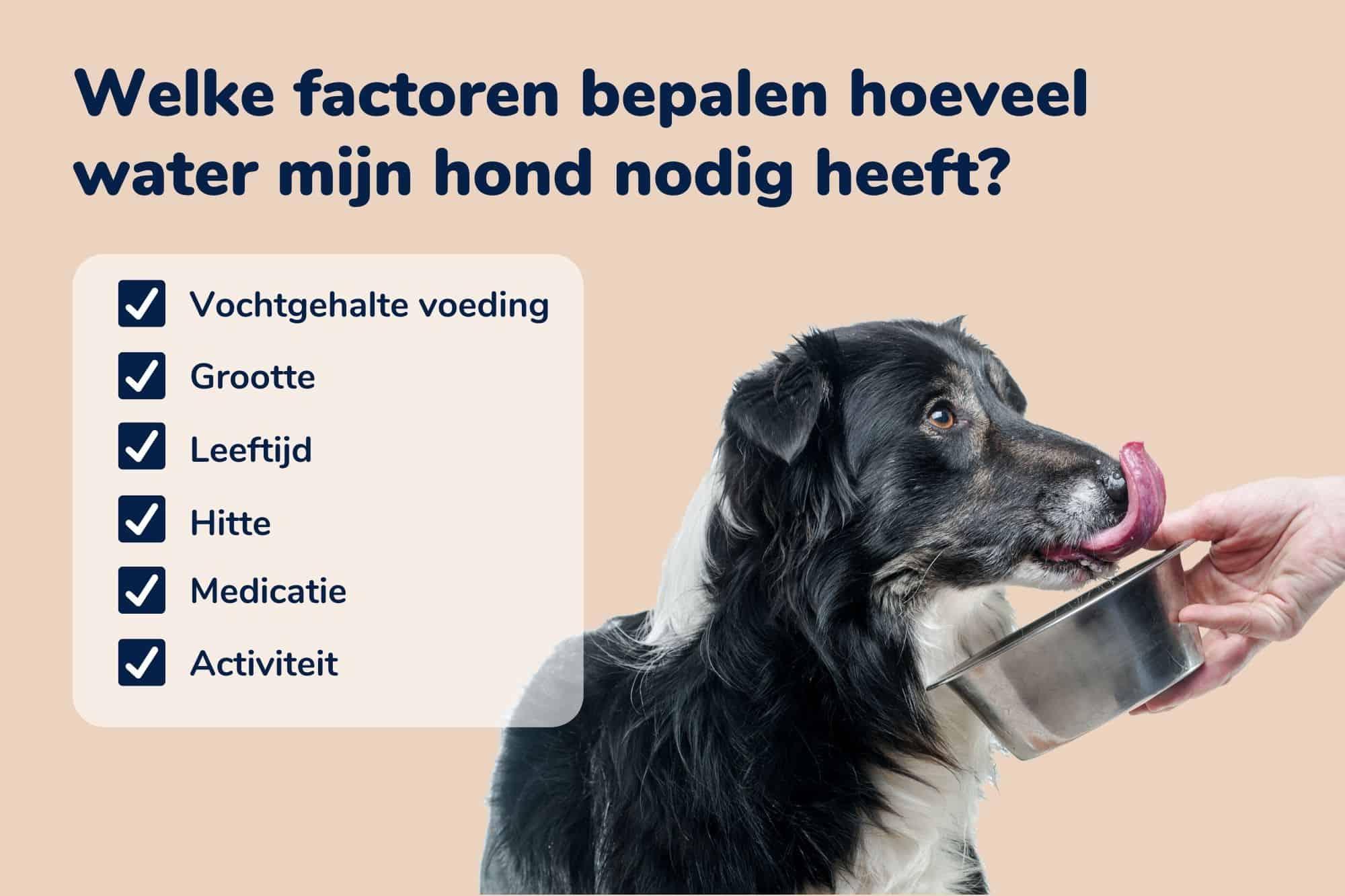 Veel factoren zijn bepalend voor de hoeveelheid water die jouw hond nodig heeft. Dit zijn de belangrijkste: het vochtgehalte van de voeding, de grootte van je hond, de leeftijd van je hond, de hitte, eventuele medicatie van je hond en de activiteiten die je hond dagelijks uitvoert.
