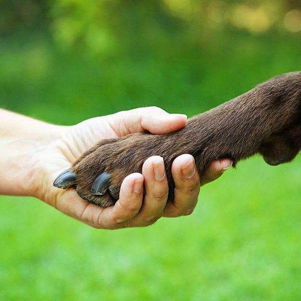 een hond leren om een pootje te geven