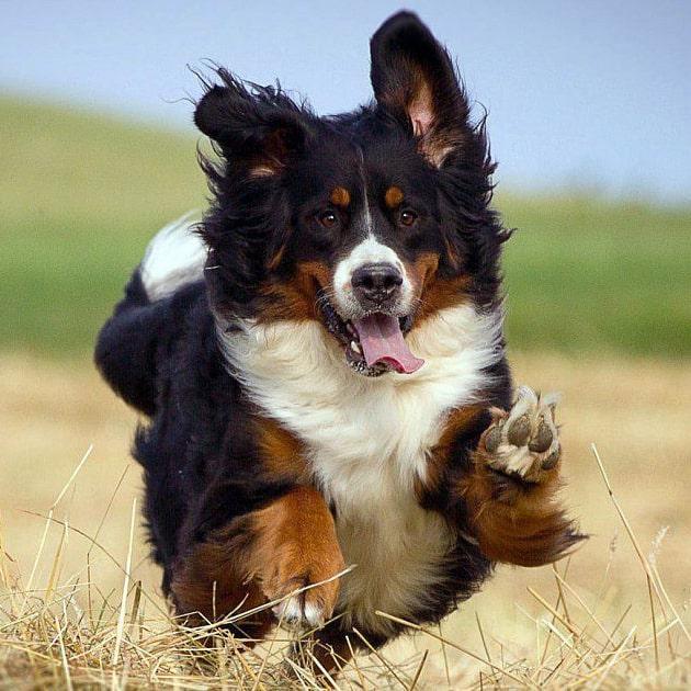 een hond leren om te springen