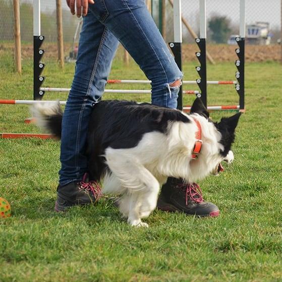 je hond leren om tussen de benen te lopen