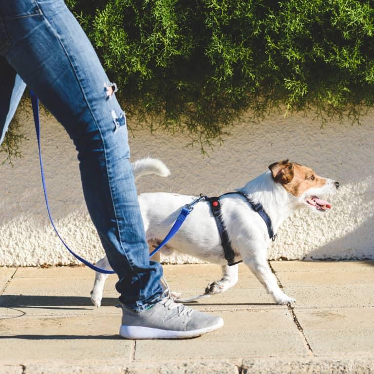 mijn hond trekt aan de lijn bij het wandelen