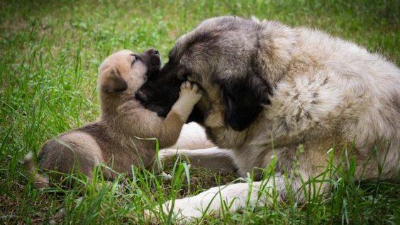 puppy socializeren