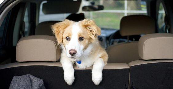puppy in wagen