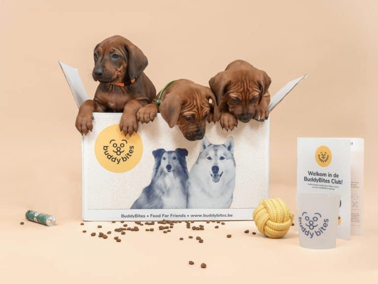 Het puppypakket van buddybites bevat gepersonaliseerde hondenvoeding voor een puppy, een maatbeker, voedingsgids, speelgoedje, koekjesrol en kauwbot.