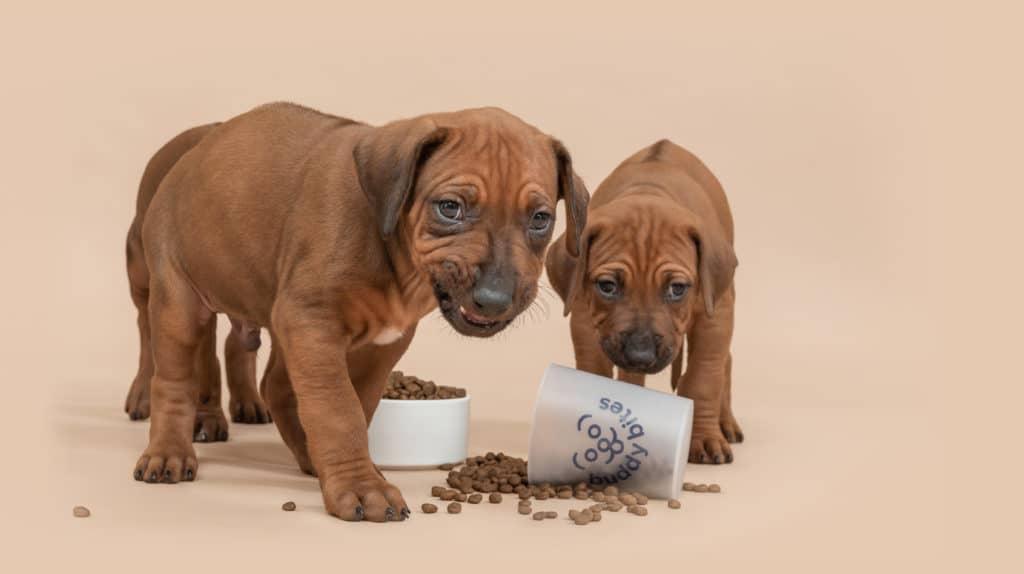 Puppy's eten BuddyBites hondenvoeding