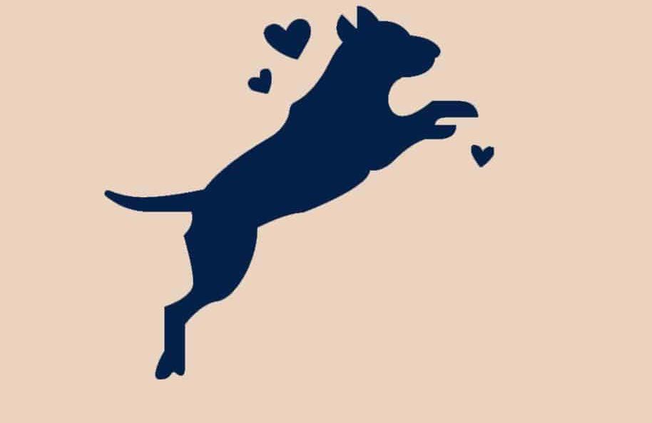 energierijke hondenvoeding