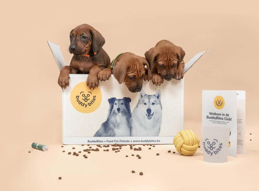 Rhodesian ridgeback pups in BuddyBites doos