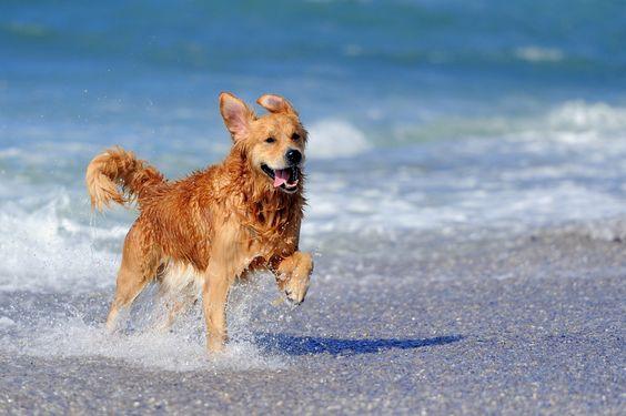 hond naar het strand