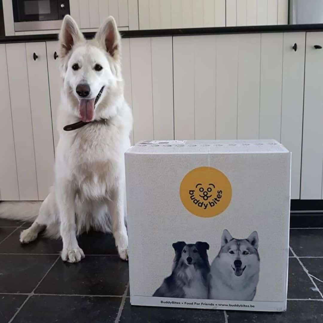 Zwitserse witte herder Yuki met buddybites doos
