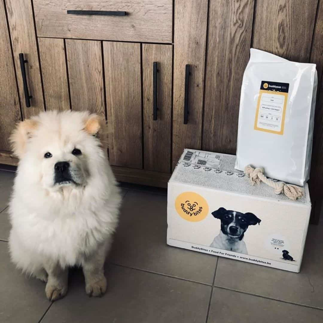 samojeet naast zijn aangepast hondenvoeding van buddybites met gratis speeltje