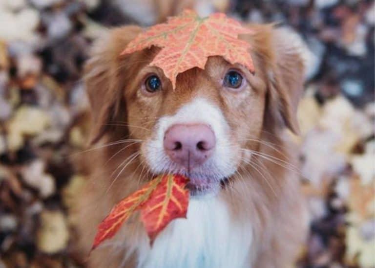 Hond in de herfst met paddenstoelen