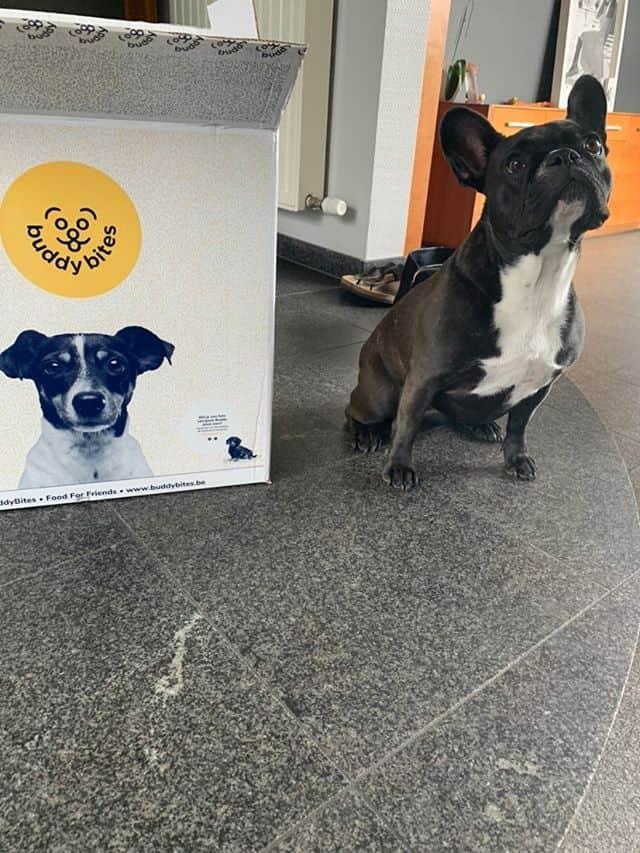 beste hondenvoeding franse bulldog