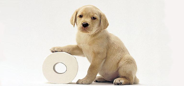 Puppy met toiletrol, maak je puppy zindelijk - BuddyBites