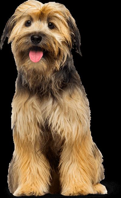 Hondenvoeding voor gesteriliseerde en gecastreerde honden - bruine hond - BuddyBites