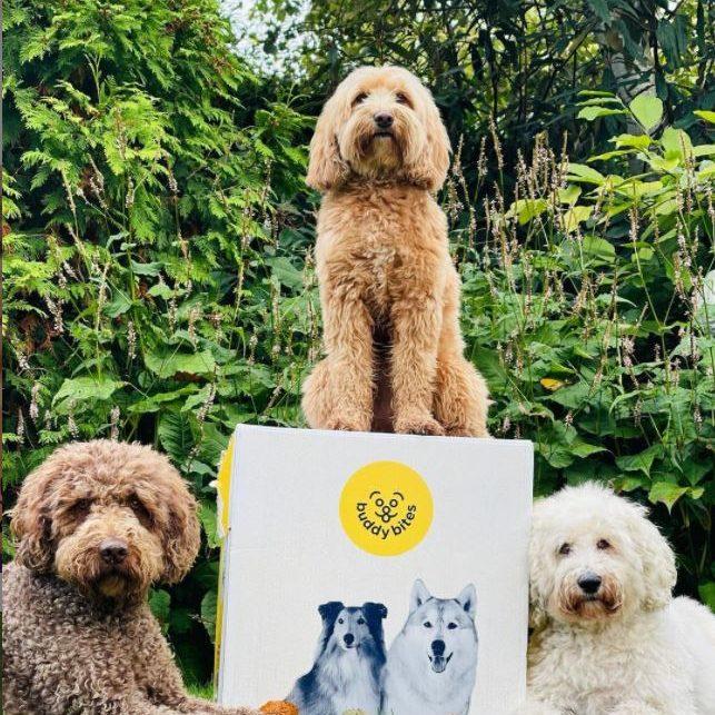 Drie labradoodles staan bij doos met de beste hondenvoeding van BuddyBites