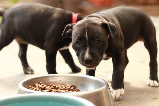 Schattige kleine staffordshire bullterriers honden eten uit kom met hondenvoeding