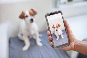hond delen op sociale media