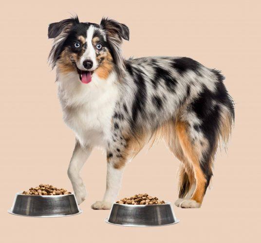 hond twijfelt tussen het beste hondenvoer