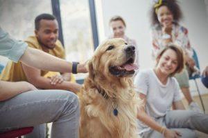 mensen aaien hond en geven hun complimentjes